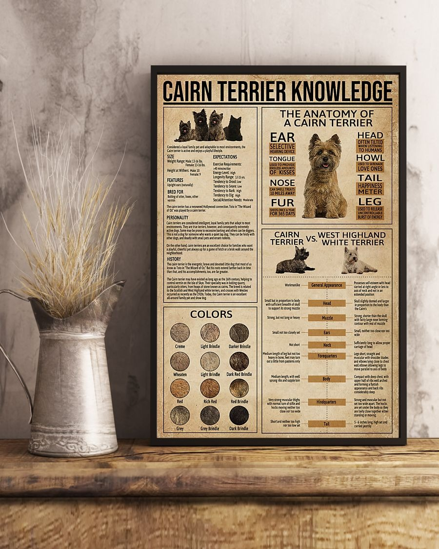 Cairn terrier knowledge poster 1